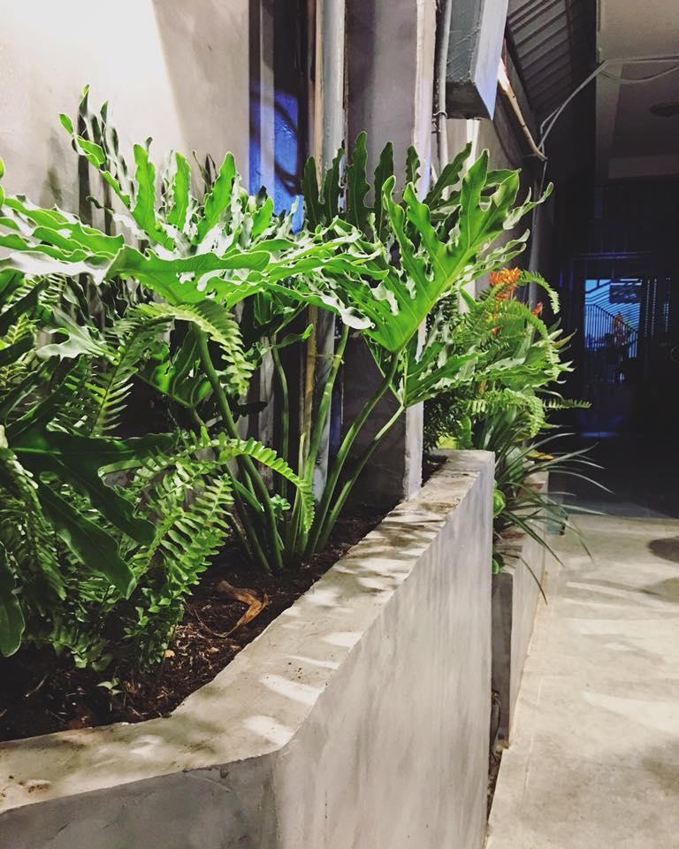 góc nhỏ cây xanh quán kiwi