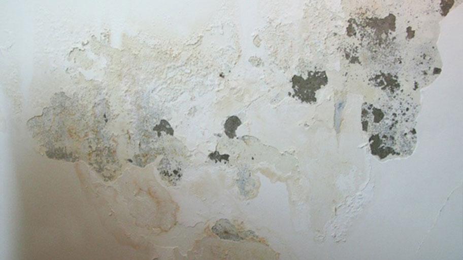 Nguyên nhân tường nhà bị ẩm mốc